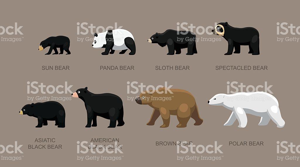 Bear Sizes Cartoon Vector Illustration stock vector art 613305726.