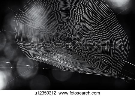 Stock Photo of Spider web close up in monochrome.