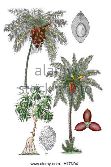 Altès Cut Out Stock Images & Pictures.
