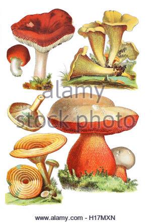 Heilpflanzenkunde Stock Photos & Heilpflanzenkunde Stock Images.
