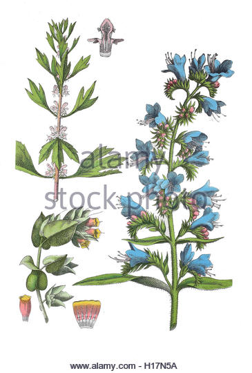 Homoeopathie Cut Out Stock Images & Pictures.