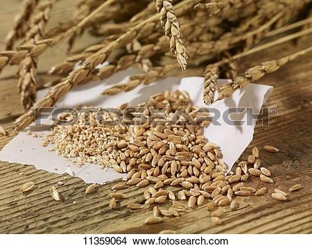 Stock Photo of Ears of spelt, spelt seeds and spelt groats on a.
