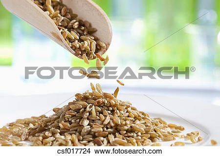 Stock Photo of Spelt grains pouring from wooden scoop, close up.