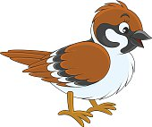 Sparrow Clip Art, Vector Sparrow.