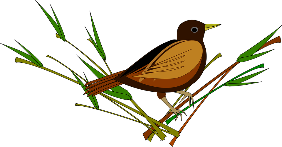 Free vector graphic: Sparrow, Bird, Animal.