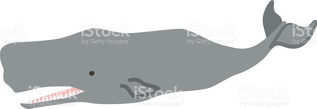 Sperm Whale Clip Art, Vector Images & Illustrations.