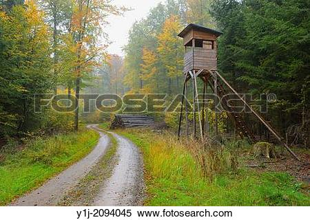 Stock Image of Hunting blind in beech forest, Spessart, Bavaria.