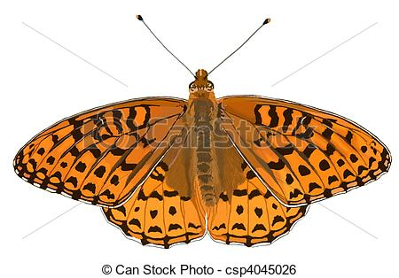 Stock Illustration of Atlantis Fritillary butterfly, Speyeria.