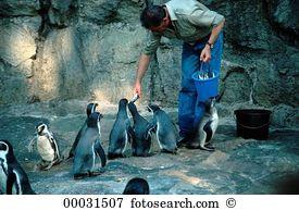 Animal caretaker Stock Photo Images. 79 animal caretaker royalty.