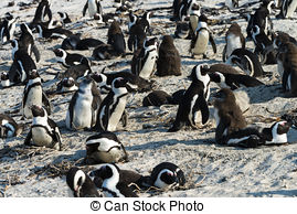 Penguins Stock Photo Images. 18,636 Penguins royalty free pictures.