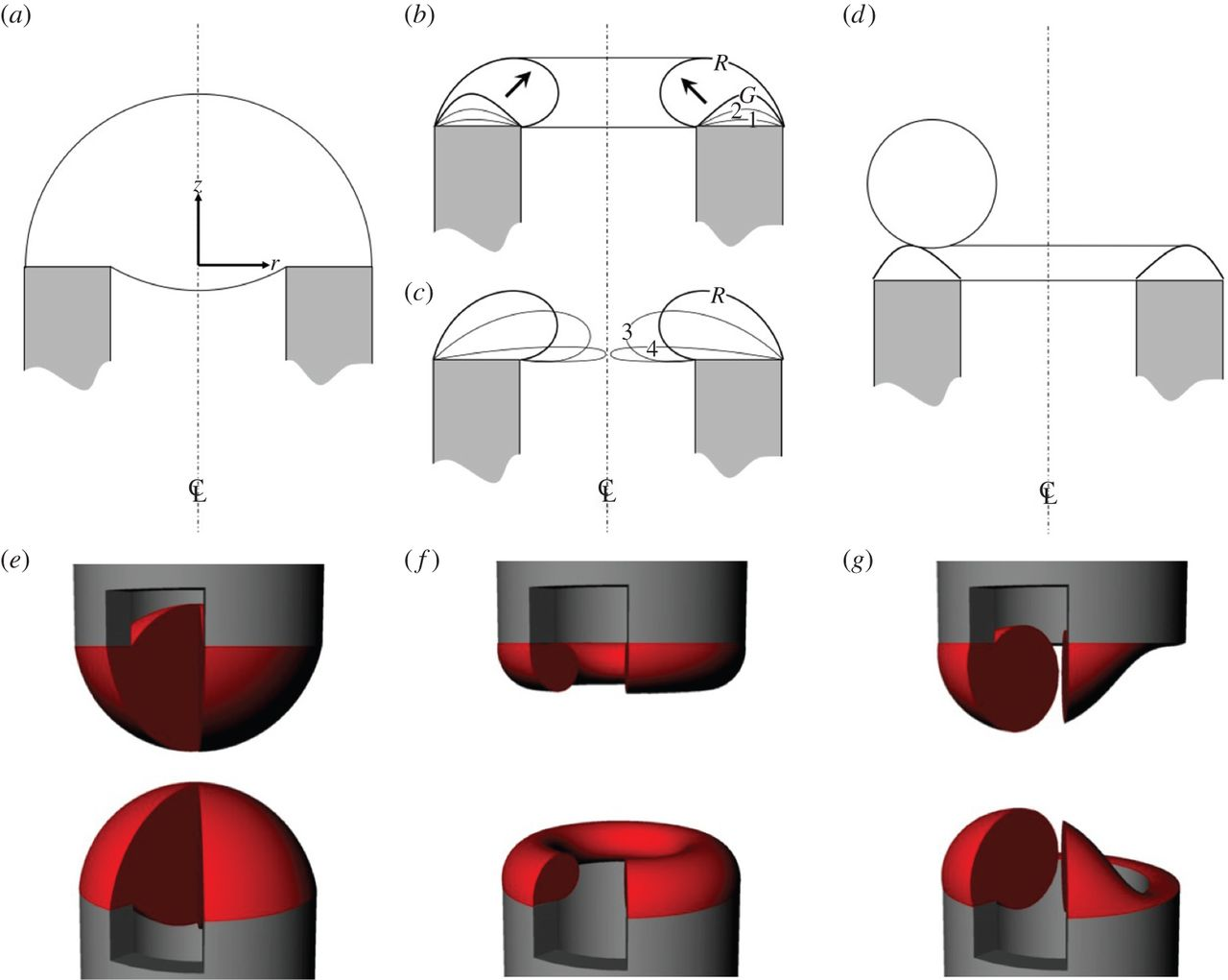 Tissue growth controlled by geometric boundary conditions: a.