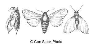 Sphingidae clipart #13
