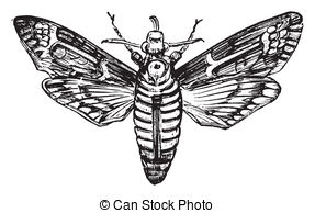 Sphingidae Stock Illustrations. 11 Sphingidae clip art images and.
