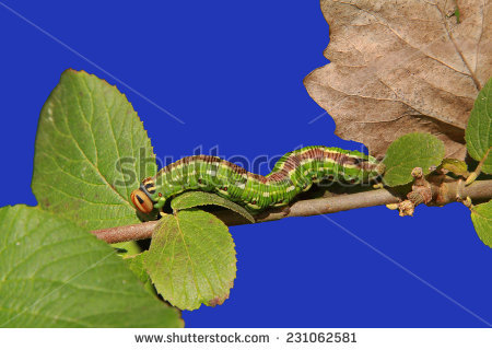 """larval Stage"""" Stock Photos, Royalty."""