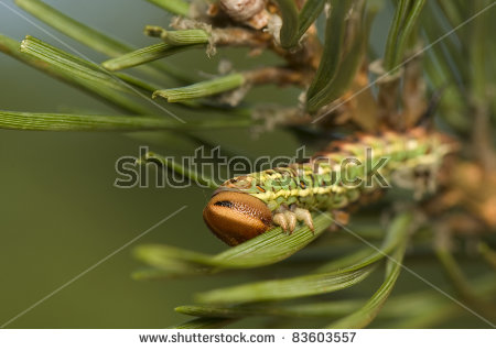 Beautiful Giant Silk Moth Butterfly Called Stock Photo 333376883.