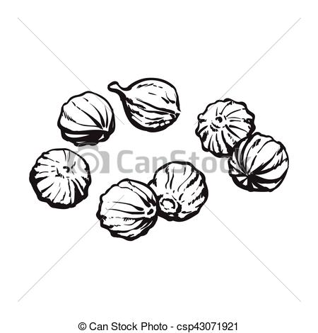 Vector Illustration of Coriander seeds, sketch style vector.