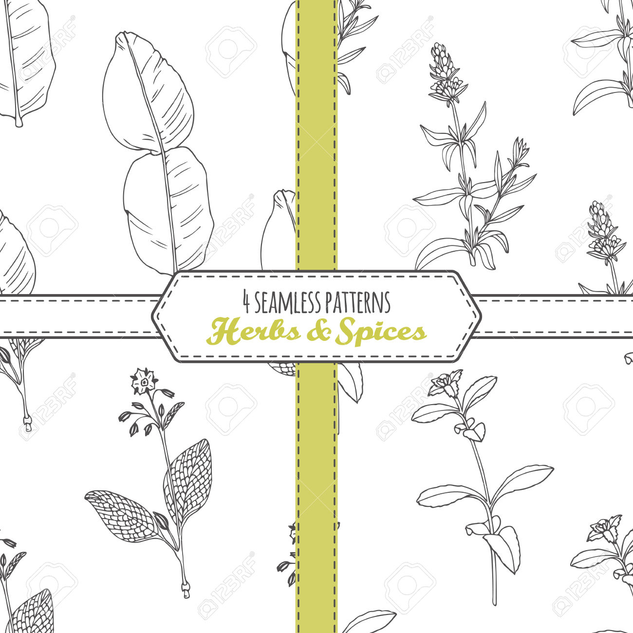Hand Drawn Seamless Patterns Collection With Kaffir Lime, Borage.