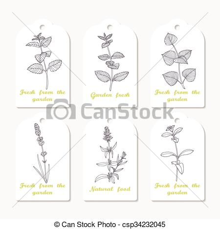 EPS Vector of Tags collection with hand drawn spicy herbs melissa.