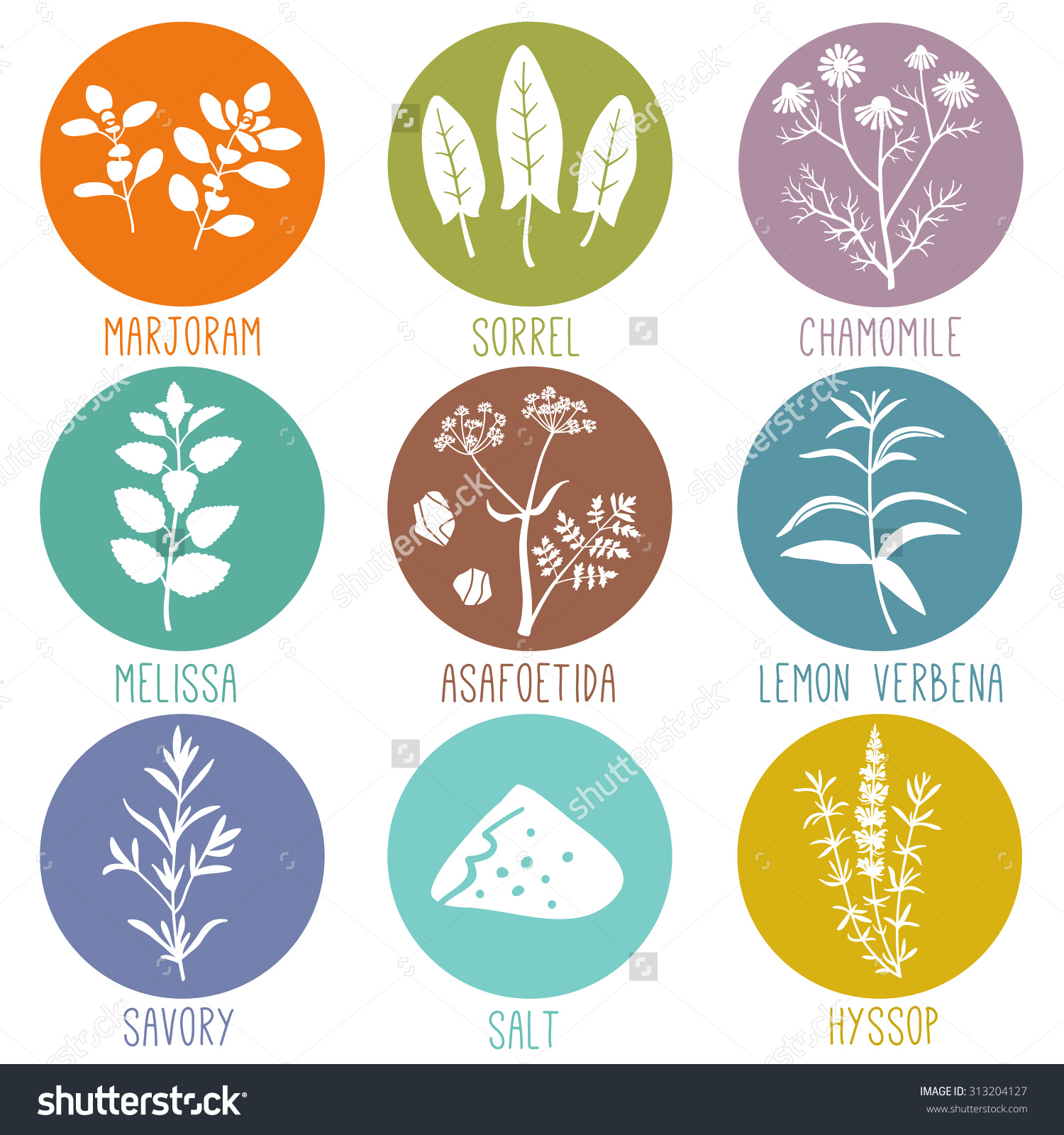 Fresh Herbs Spices Icon Set Marjoram Stock Vector 313204127.