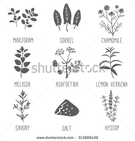 Hyssop Stock Photos, Royalty.