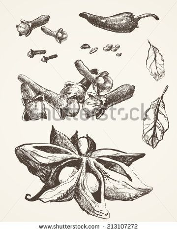 Set of spices and seasonings. Original drawings. Anise, chili.