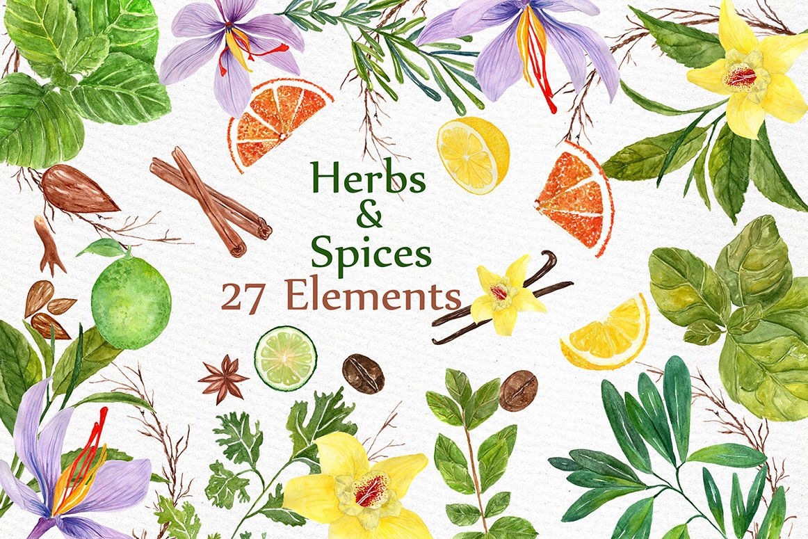 watercolor Herbs and spices clipart.