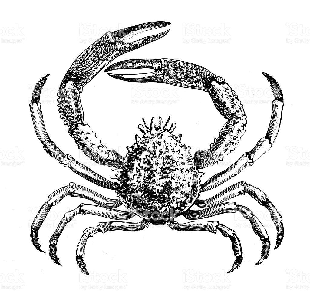 Antique Illustration Of stock vector art 489726268.