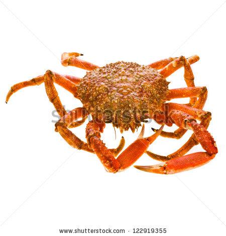 Spider Crab Stock Photos, Royalty.