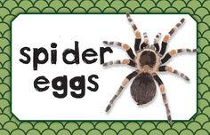 Best Spider Egg Sign Recipe on Pinterest.