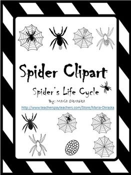 Spider Life Cycle Clipart.