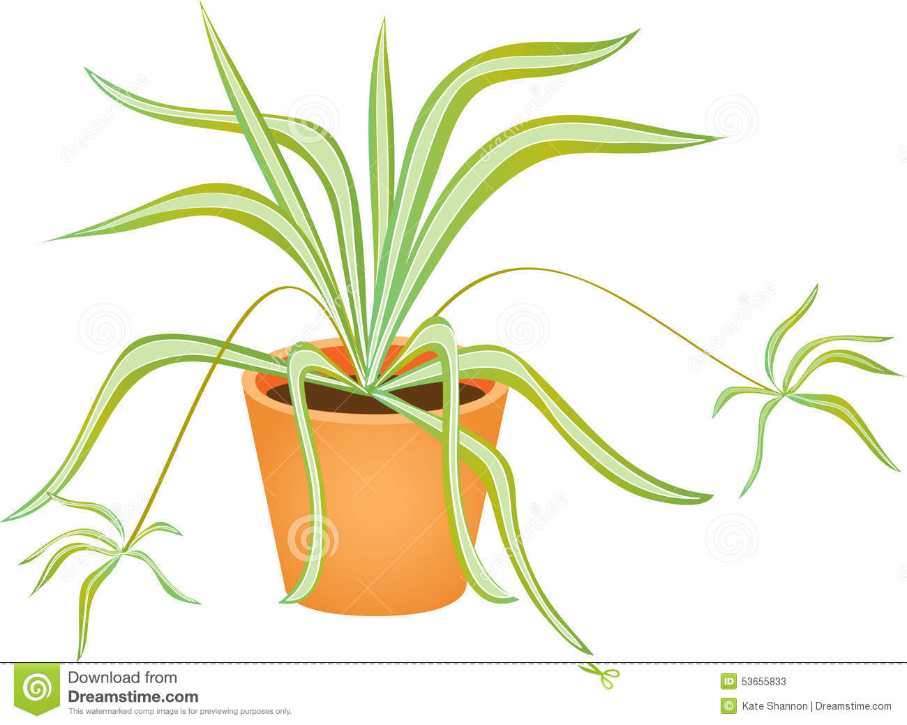Spider plant clipart #6