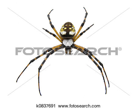 Spider in garden clipart #17