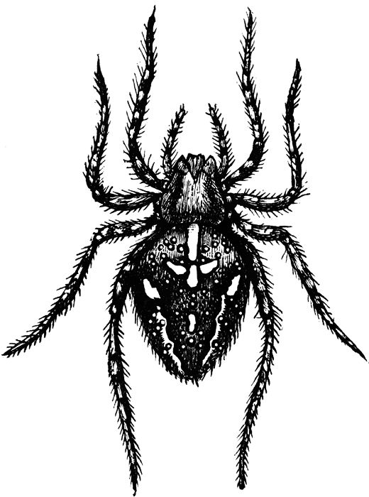 Spider clip art kids free clipart images clipartcow.