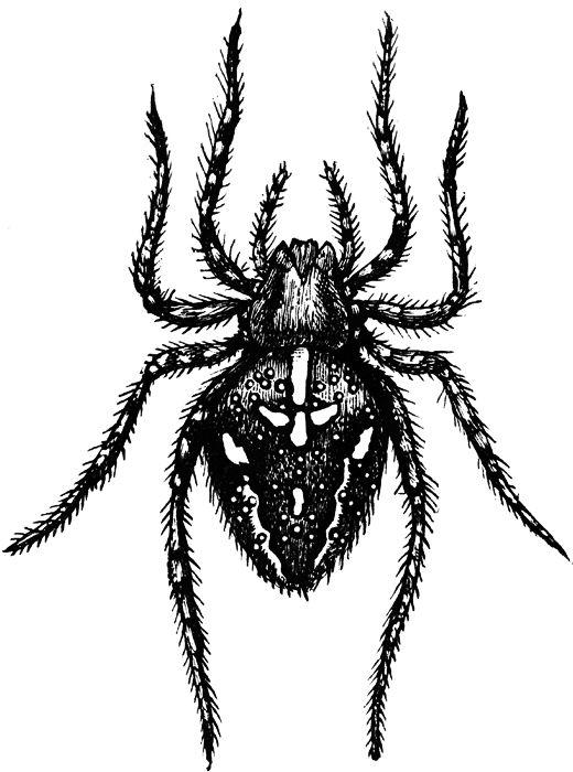 Spider in garden clipart #14