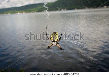 "corn Spider"" Stock Photos, Royalty."