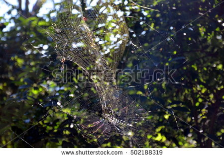Hunting Spider Stock Photos, Royalty.