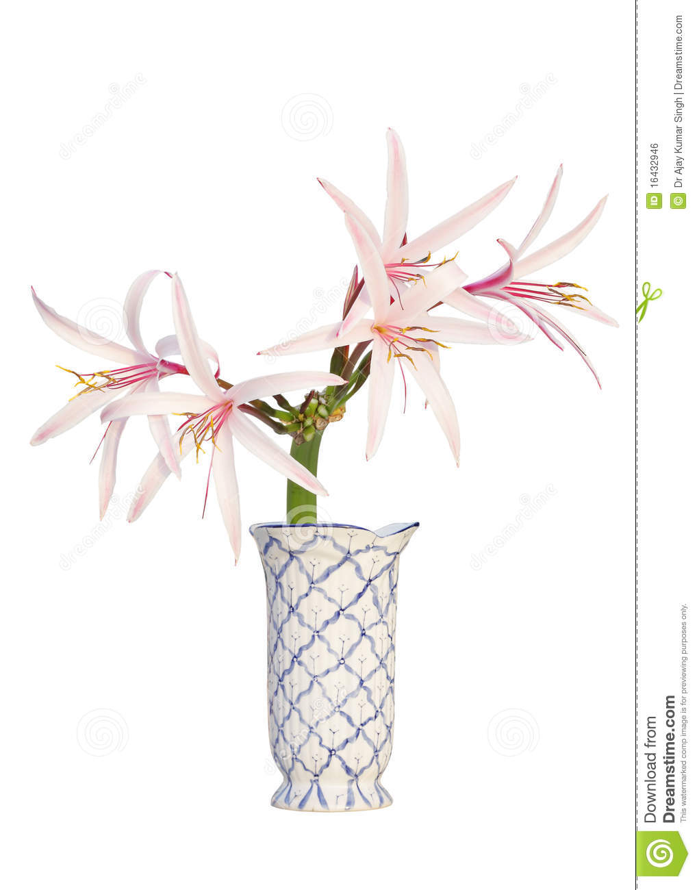 Spider Lily Free Clipart.
