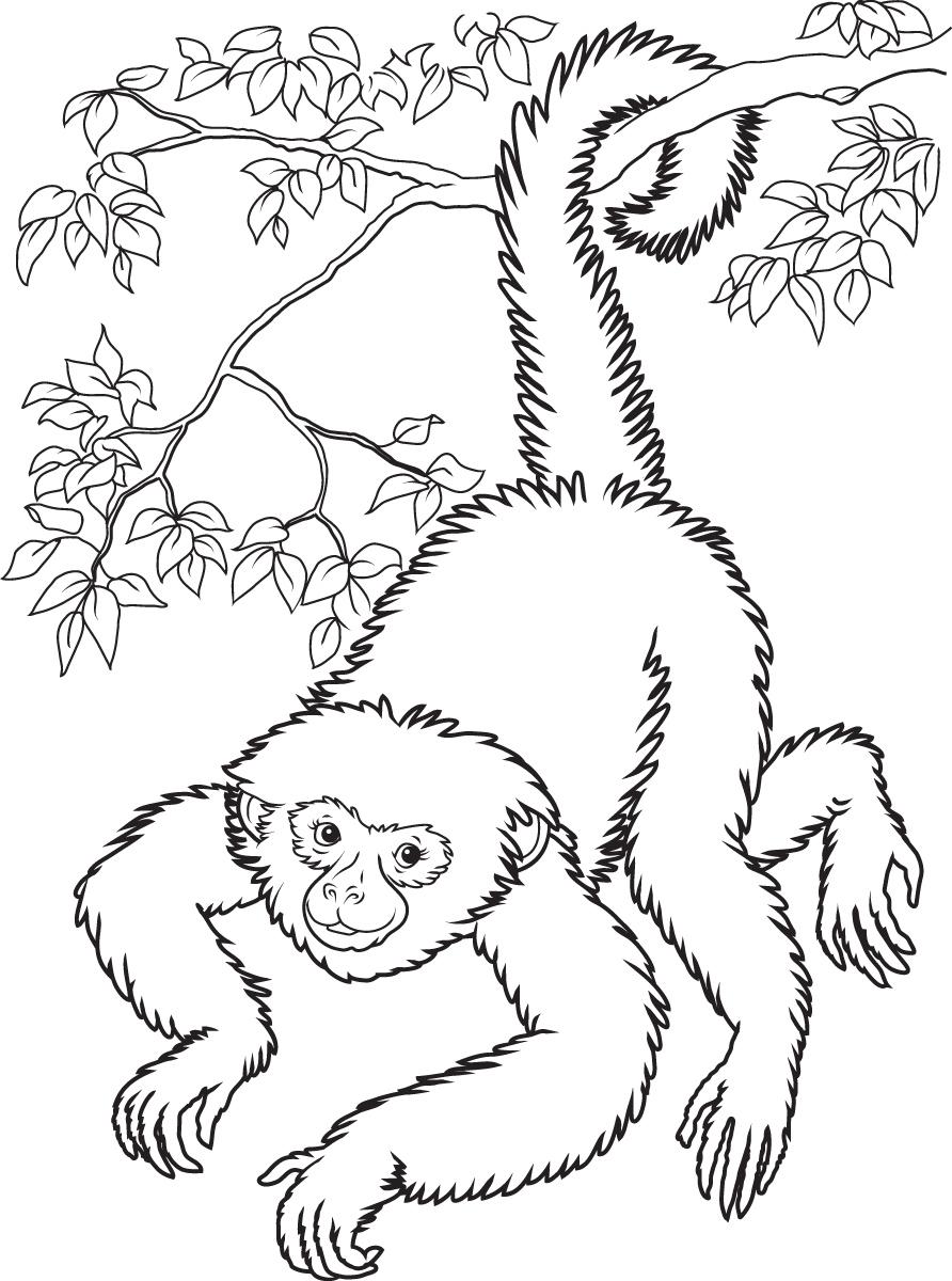 spider monkey clipart #38.