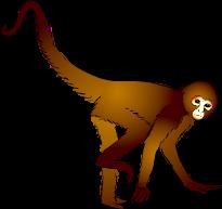 Spider monkey clipart.