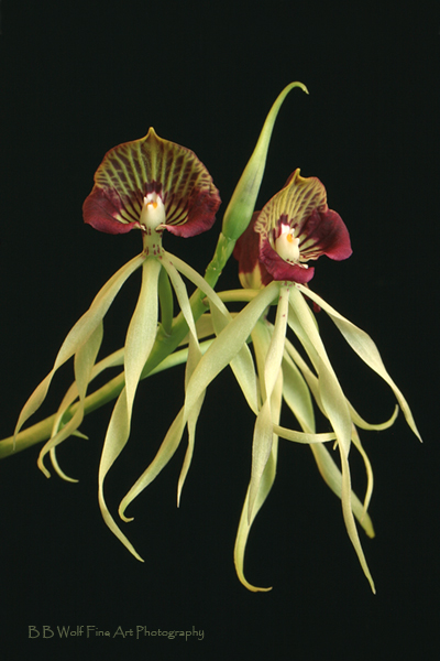 1000+ images about Orchids on Pinterest.
