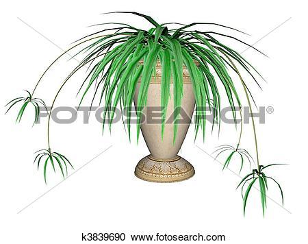 Stock Illustrations of Spider Plant k3839690.