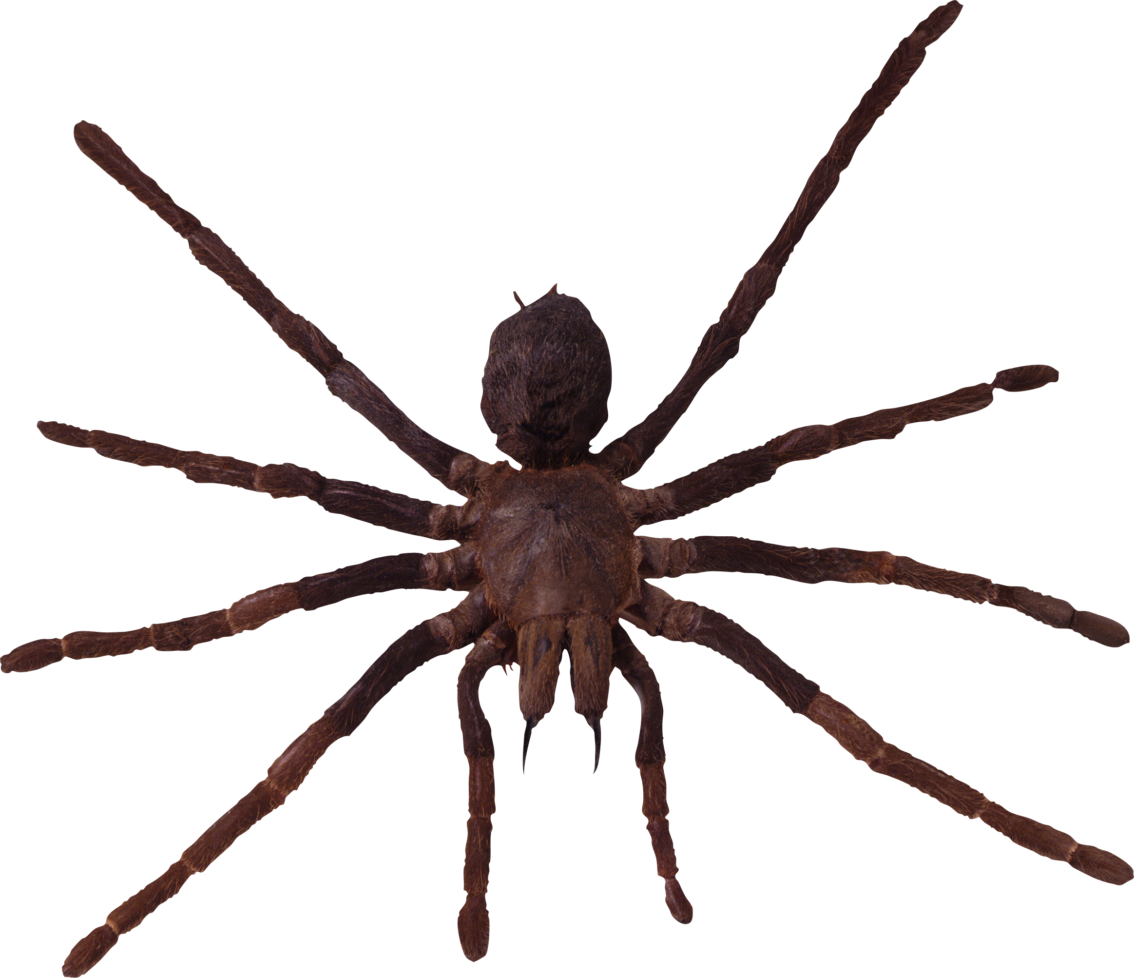 Spider PNG images, free download spider PNG photo pictures.
