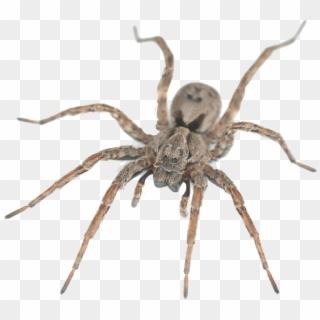 Free Spider PNG Images.