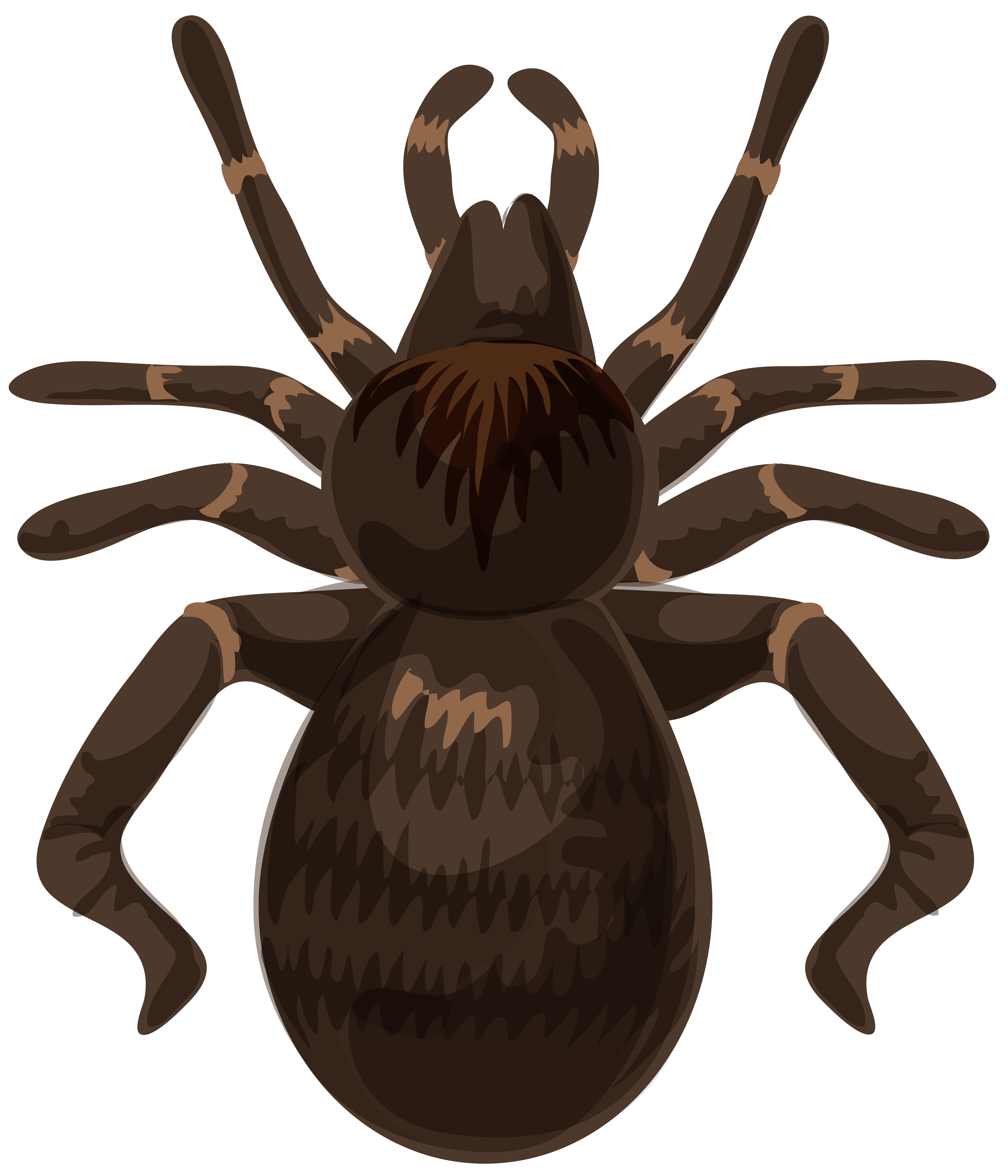 Spider PNG Clip Art Image.