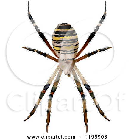 Clipart of a Wasp Spider.