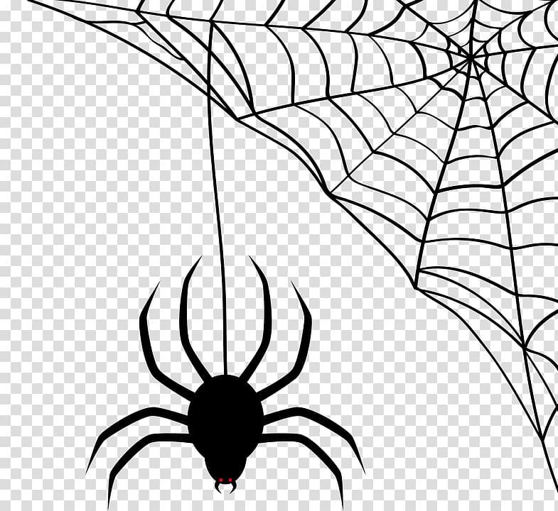 Black spider and web illustration, Spider.