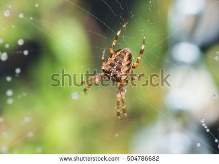 Cobweb In Garden Stock Photos, Royalty.