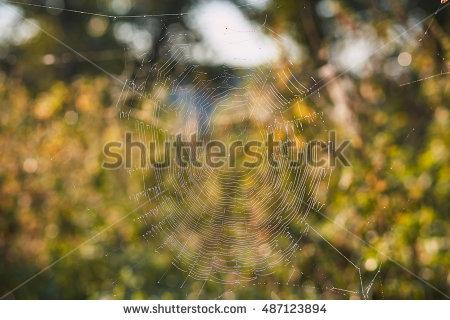 """cobweb In Garden"""" Stock Photos, Royalty."""