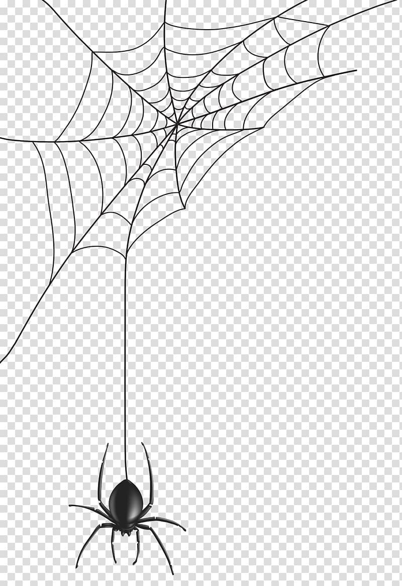 Black spider and spider web illustration, Spider web.