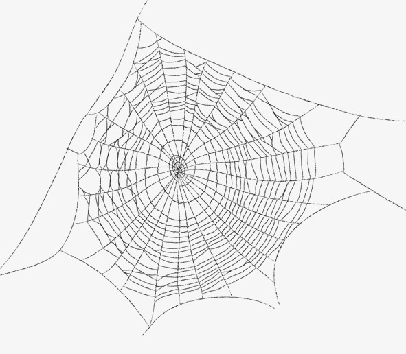 Spider Web Png Transparent Background (105+ images in.